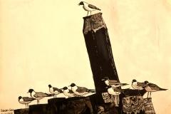 Ocracoke Gulls